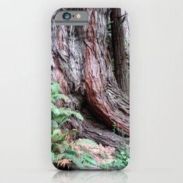 Giant Redwoods Rainforest 06 iPhone Case