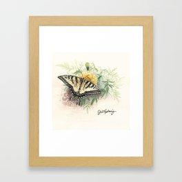 Swallowtail Study Framed Art Print