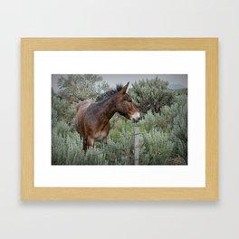Mule in Wyoming Framed Art Print