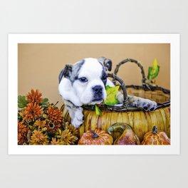 Maybelle the English Bulldog in an Autumn Basket Art Print