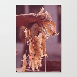 A Handful of Shrimp Canvas Print