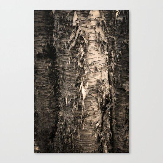 Life's a Birch Canvas Print