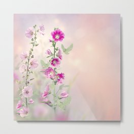 Pink and red Hollyhock flowers blooming in the garden Metal Print