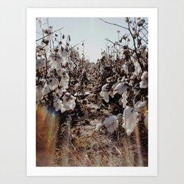 Cotton Fields in Clarksdale Art Print