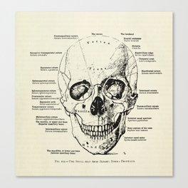Vintage Anatomy Skull  Canvas Print