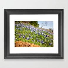 Texas Springtime Framed Art Print