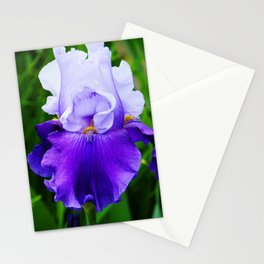 Purple and White Iris Stationery Cards