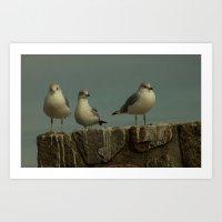 Gull  trio Art Print