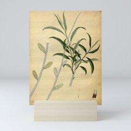 Flower salix violacea Violet coloured Willow Mini Art Print