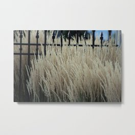 Pampas Grass and Iron Metal Print