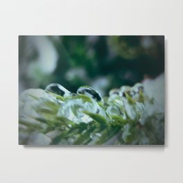 ice on the bush Metal Print