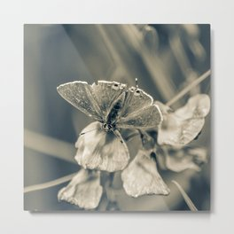 Cream-tone butterfly Metal Print