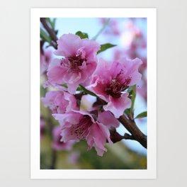 Peach Tree Blossom Close Up Art Print