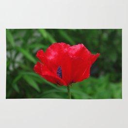 Red oriental poppy flower Rug