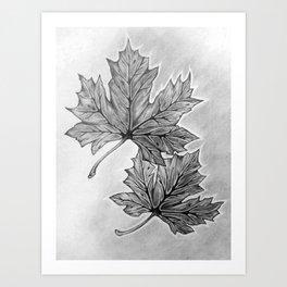 Shadow Maple Art Print
