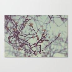 Flaking petals Canvas Print