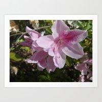 Flower in Bloom of Spring Art Print