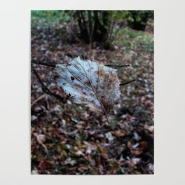 Leaf floating in the air Poster