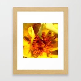 Pollen Macro Photography By Saribelle Rodriguez Framed Art Print