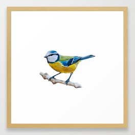 Blue Tit Framed Art Print
