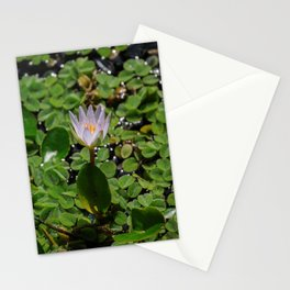 Tropical Water Lily Flower Nymphaea Daubenyana Stationery Cards