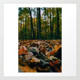 Autumn's Perspective Art Print
