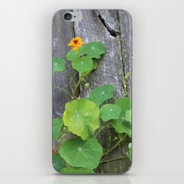 The Garden Wall iPhone Skin