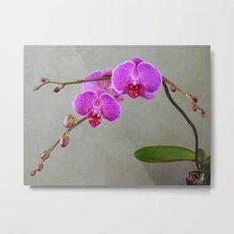 Dark Pink Phalaenopsis Orchid Metal Print