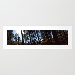 Woods of Mount Lemon Art Print