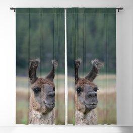 Llama Portrait - 1 Blackout Curtain