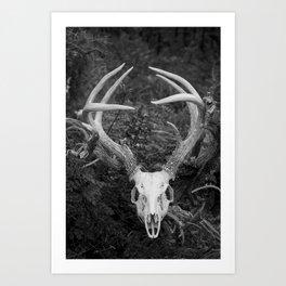 Deer Skull Black & White Art Print