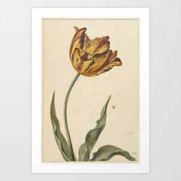 Geel-oranje-rode tulp, Anonymous, 1700 - 1800 Art Print