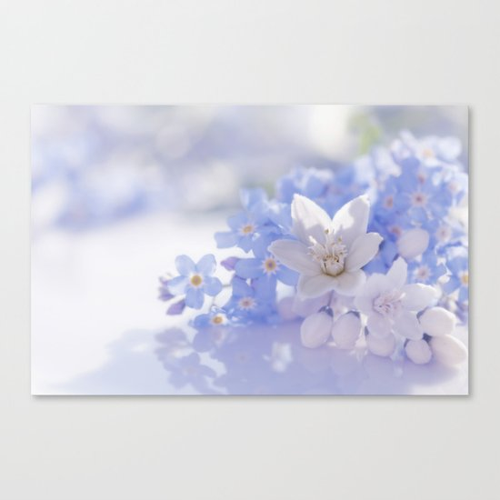Queen and court- Springflowers in blue and white - Stilllife Canvas Print