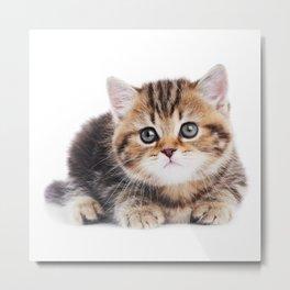 Lonely Kitten Metal Print