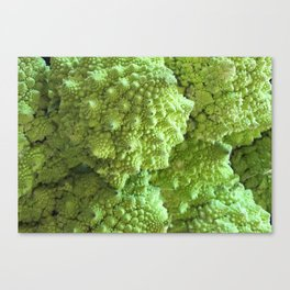 Romanesco Cauliflower - Freeky vegi Canvas Print