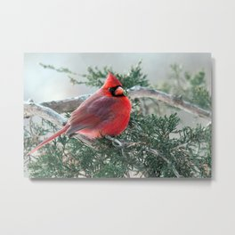 Red on Red: Northern Cardinal Metal Print