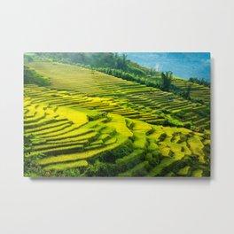 Viet Nam  Art Print, Sapa Rice Terrace, Paddy field, Wall Art Decor, Travel Poster, Fine Art Print Shop Metal Print