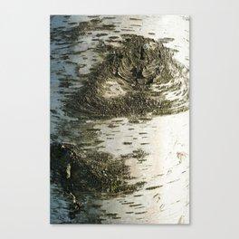 Birch Bark I Canvas Print