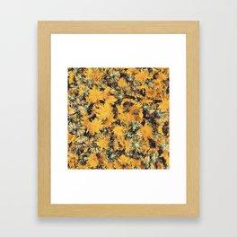 Foraging Sunshine Framed Art Print