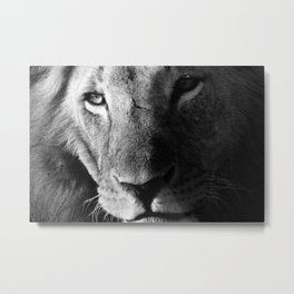 Lion in Black and White Metal Print
