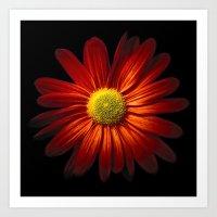Chrysantheme Art Print
