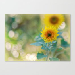 Kelly's Sunflowers Canvas Print