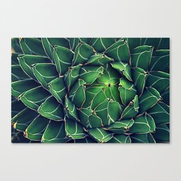 Queen Victoria Agave Canvas Print