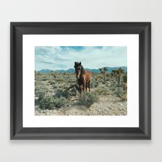 Nevada Desert Horse Framed Art Print