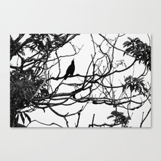 Black bird Canvas Print