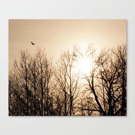 Bird Soaring Over Aspens Canvas Print