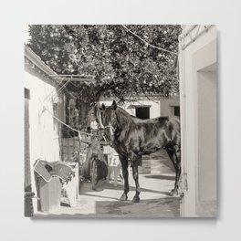black horse Golega Portugal Metal Print