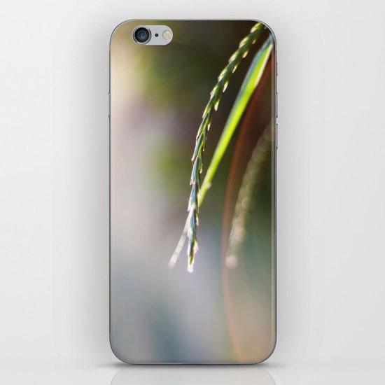 Evening Light iPhone & iPod Skin