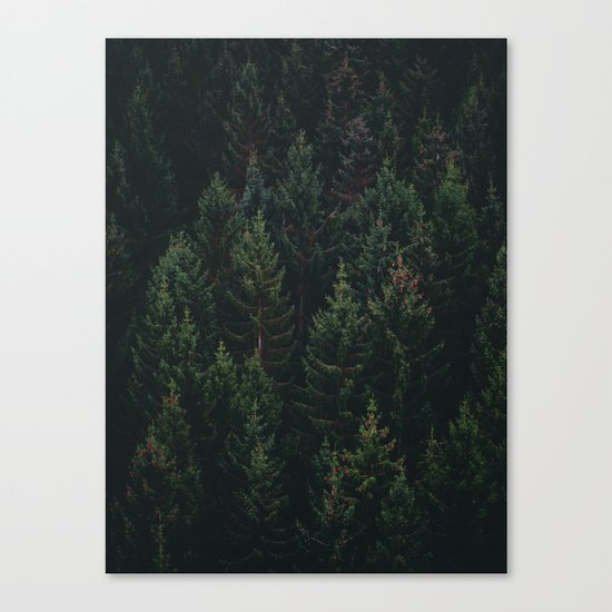 Forest of Pines Canvas Print