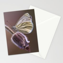 White butterfly on pasque flower Stationery Cards